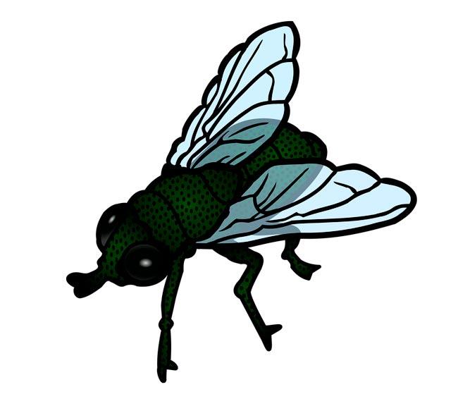 Картинка с мухой для детей, дизайна